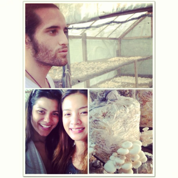 Mushroom farm tour