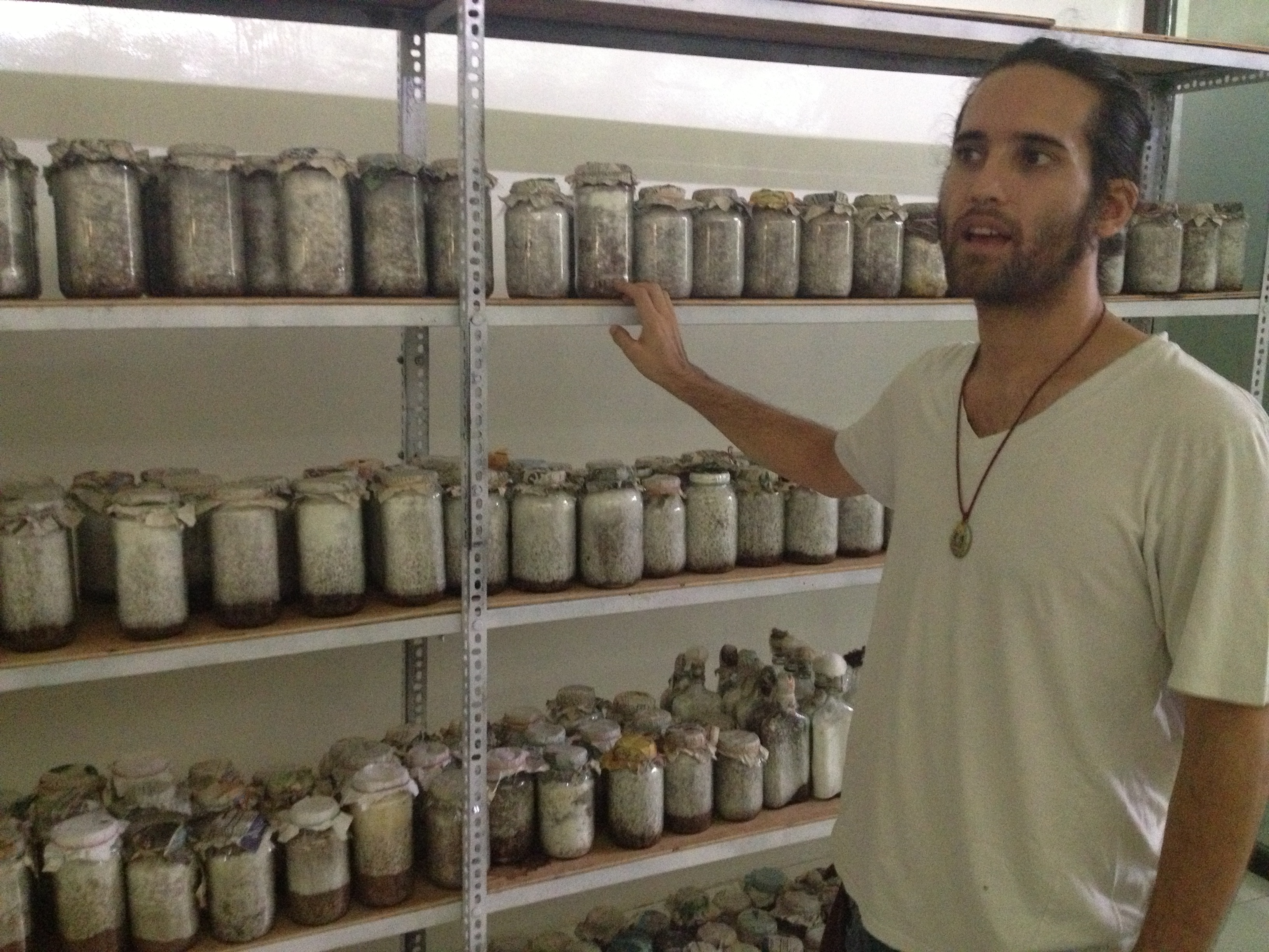 Culturing mushrooms by the variety